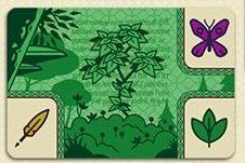 codex naturalis carte ressource bombyx | Jeux Toulon L'Atanière